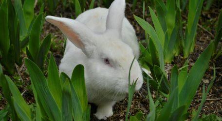 Кролівництво